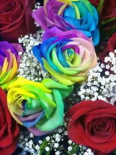 Beautiful Colors Roses Mobile Wallpaper