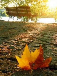 Autumn Leave Mobile Wallpaper