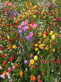 Colorful Flowers Field Mobile Wallpaper