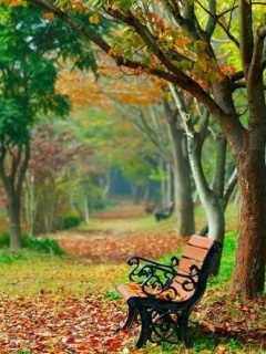 Autumn Alone Bench Mobile Wallpaper