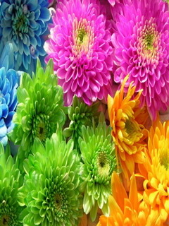Colors Beautiful Flowers Mobile Wallpaper