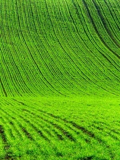 Nice Green Field Mobile Wallpaper