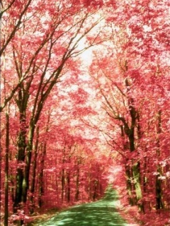 Pink Trees Mobile Wallpaper