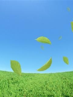 Leaf Green Nature Mobile Wallpaper