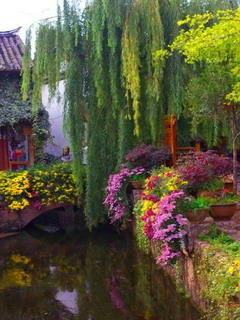 Weeping Willow Bridge In Yunnan China Mobile Wallpaper