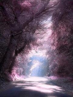 Purple Vision Mobile Wallpaper