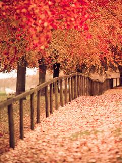 Cute Colors Autumn Mobile Wallpaper