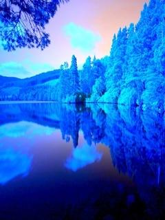 Blue Forest Mobile Wallpaper