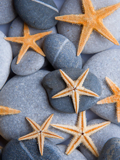 Starfish On Stones Mobile Wallpaper