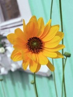 Yellow Love Flower Mobile Wallpaper