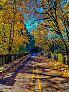 Nice Autumn Road Mobile Wallpaper