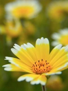 Nice Yellow Flower Mobile Wallpaper