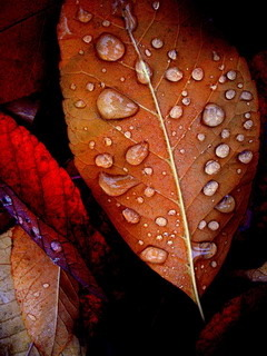 Autumn Leaves Drops Mobile Wallpaper
