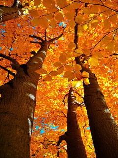Fall Splendor Autumn Mobile Wallpaper