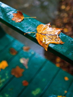 Falling Autumn Leafs Mobile Wallpaper