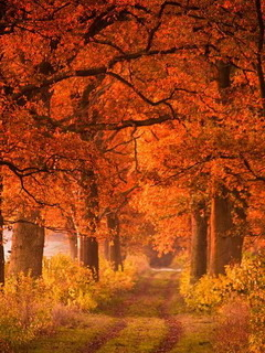 Orange Autumn Way In Germany Mobile Wallpaper