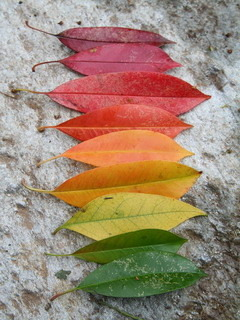 Colors Of Fall Mobile Wallpaper