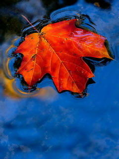 Red Fall Leaf Mobile Wallpaper