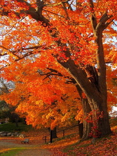 Orange Autumn Newburyport Mobile Wallpaper