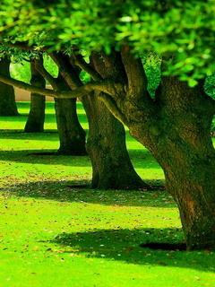 Green Garden Nature Mobile Wallpaper