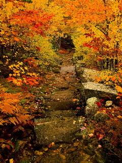 Autumn Acadia Maine Mobile Wallpaper