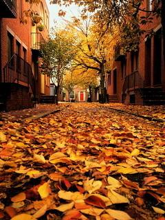 Brown Autumn Fall Mobile Wallpaper