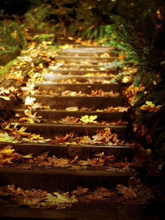 Autumn Stairs Leaves Mobile Wallpaper