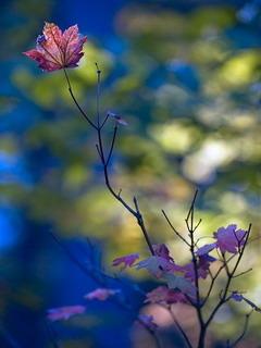 Nice Autumn Colors Mobile Wallpaper