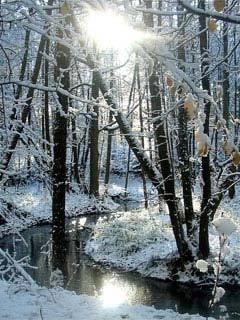 Winter River Sun Mobile Wallpaper