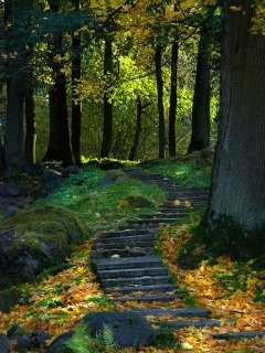 Walk Stairs Nature Mobile Wallpaper