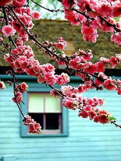 Lovely Flower Colors Mobile Wallpaper