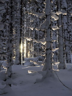 Winter Forest Mobile Wallpaper