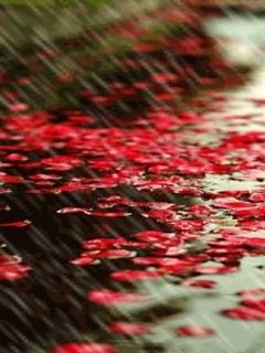 Raining And Falls Mobile Wallpaper