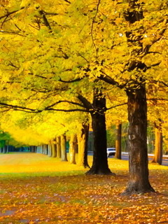 Yellow Autumn Garden Mobile Wallpaper