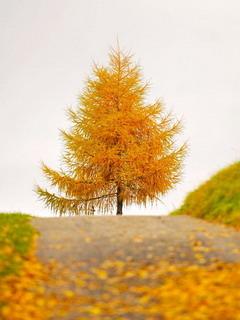 Switzerland Autumn Road Mobile Wallpaper