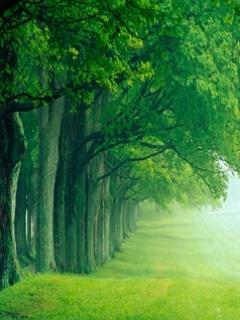 Green Morning Trees Mobile Wallpaper