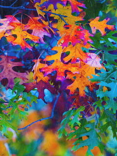 Colors Leaves Autumn Mobile Wallpaper