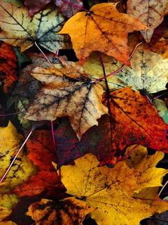 Fall Leaves Mobile Wallpaper