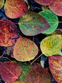Colors Drops Leaves Mobile Wallpaper