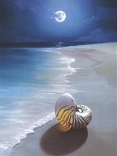 Moonlight Beach Mobile Wallpaper