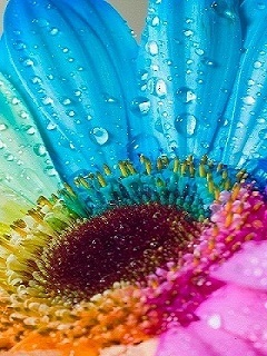 Colorful Flower On Drop Mobile Wallpaper