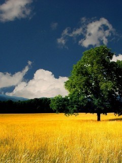 Yellow Silent Field Nature Mobile Wallpaper