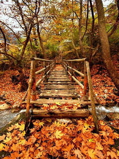Orange Autumn Bridge Mobile Wallpaper