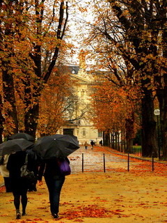Autumn Nature In Paris Mobile Wallpaper
