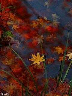 Autumn Red Leaves Pond Japan Mobile Wallpaper