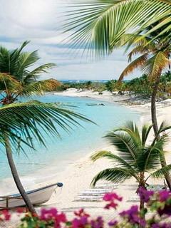 Beach In Dominican Republic Mobile Wallpaper