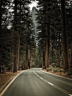Road Big Trees Mobile Wallpaper