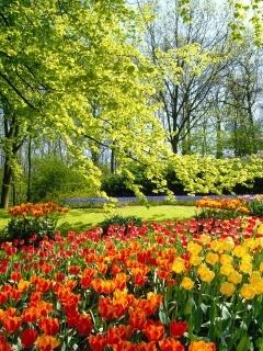 Spring Park Mobile Wallpaper