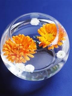 Flower Inside Bowl Mobile Wallpaper