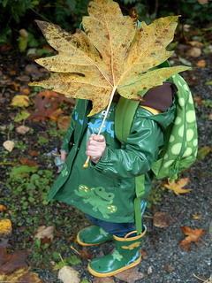 Leaf Hide Face Mobile Wallpaper